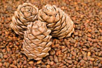 КЕДРОВЫЕ ОРЕХИ: Полезные свойства Кедровые орехи для
